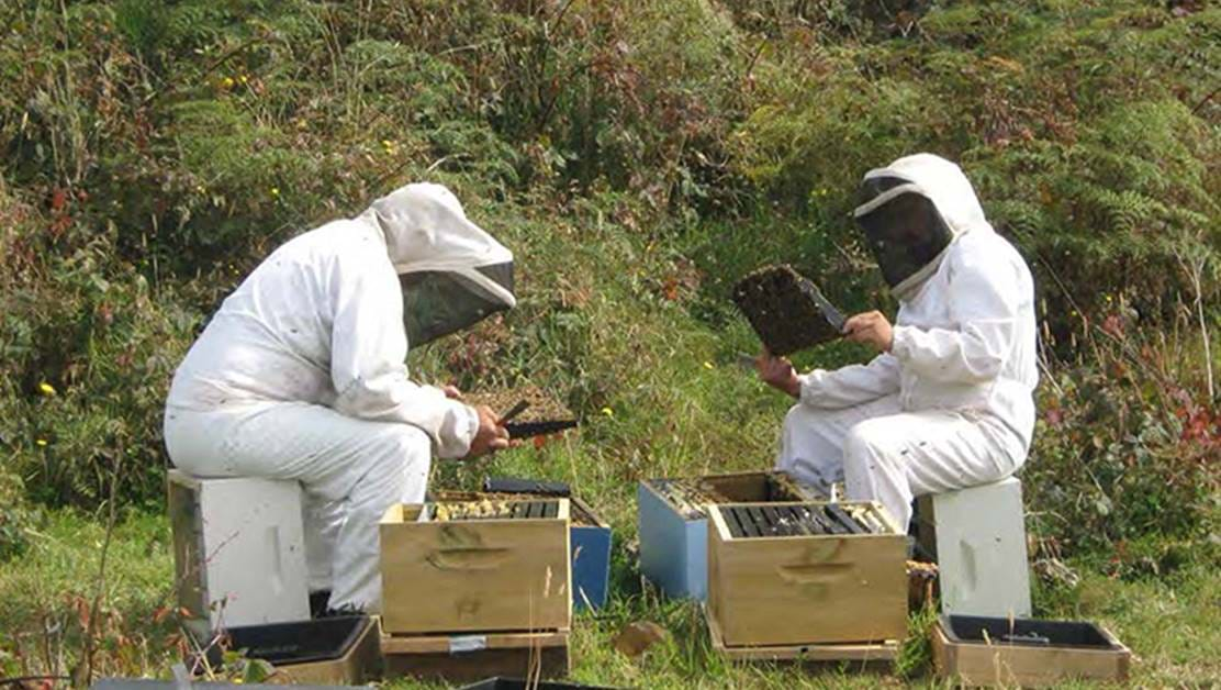 Two men in beekeeping outfits checking hives.