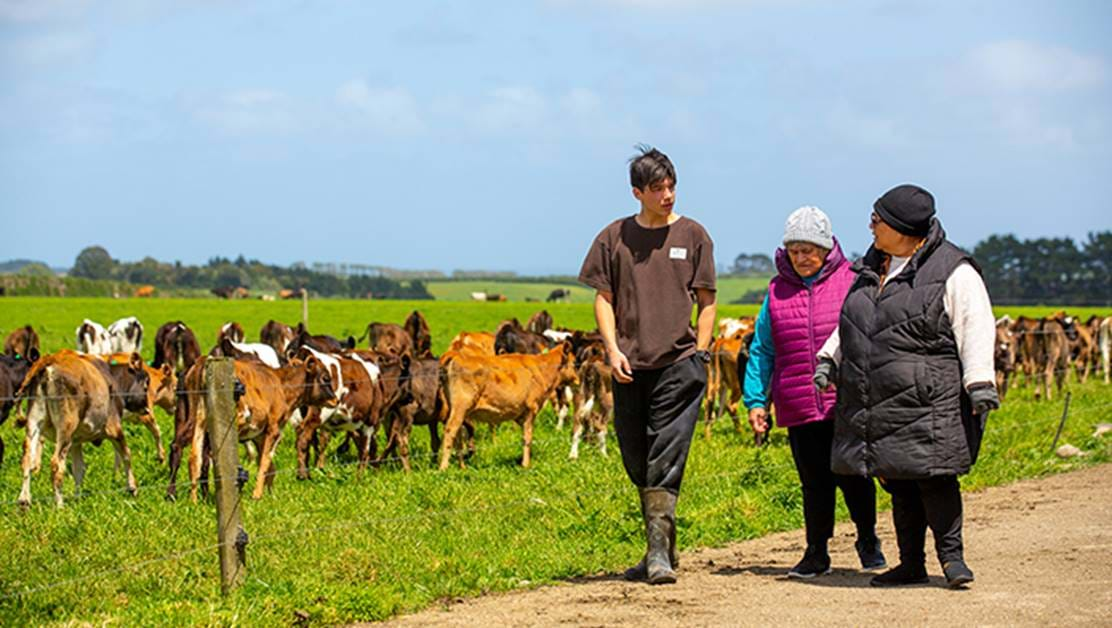 Three people walking past a field of cows together.